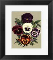 Framed Tricolor Pansies I