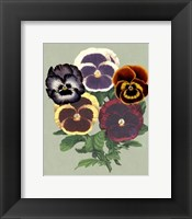 Framed Tricolor Pansies II