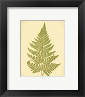 Framed Lowes Fern I (PP)