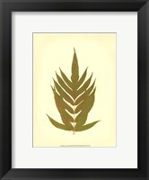 Lowes Fern II (PP) Framed Print
