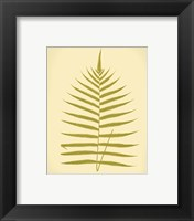 Framed Lowes Fern IV (PP)