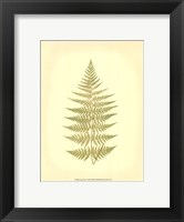 Framed Lowes Fern V (PP)