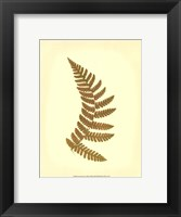 Lowes Fern VI (PP) Framed Print