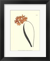 Framed Fiery Florals IV