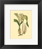Framed Orchids II