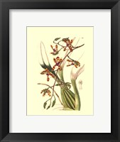 Framed Orchids III