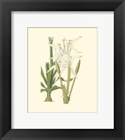 Framed Floral IV