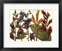 Framed Printed Arena Botanical III