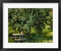 Framed Under the Apple Tree