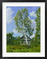 Framed Birch Tree Near Dwelling