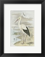 Framed White Stork