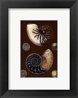 Framed Shells on Cocoa I