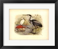 Framed Heron & Ibis