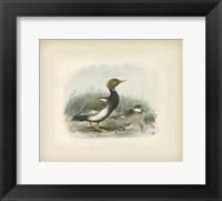 Framed Wigeon