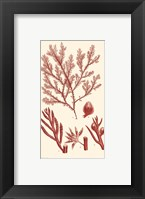Shades of Coral IV Framed Print