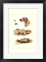 English Setter Framed Print