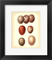 Bird Egg Study I Framed Print
