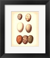 Framed Bird Egg Study II
