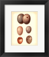 Bird Egg Study IV Framed Print