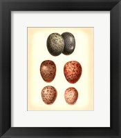 Framed Bird Egg Study V