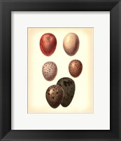 Bird Egg Study VI Framed Print