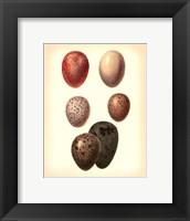 Framed Bird Egg Study VI