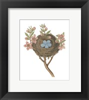 Framed Antique Bird's Nest I