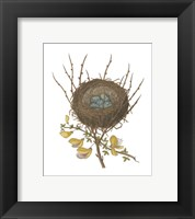 Framed Antique Bird's Nest II