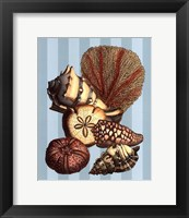 Shell and Coral on Aqua II Framed Print