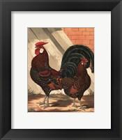 Framed Cassell's Roosters V