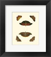 Framed Butterfly Study III