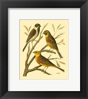 Framed Domestic Bird Family I