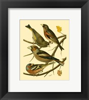 Framed Domestic Bird Family II