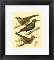 Framed Domestic Bird Family IV