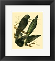 Framed Domestic Bird Family V