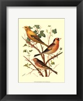 Framed Domestic Bird Family VI