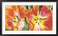 Framed Two Parrot Tulips