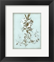 Framed Lilium on Blue