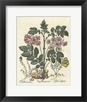 Framed Floral V