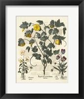 Framed Floral VI