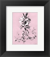 Framed Lilium on Pink