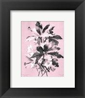 Framed Ellebore on Pink