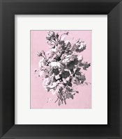 Framed Roses on Pink