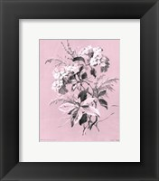 Framed Hydrangea on Pink