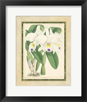 Framed Orchid III