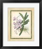 Framed Orchid V