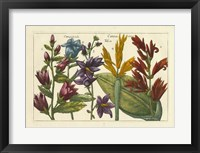 Framed Botanical III