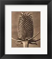 Sepia Botany Study III Framed Print