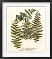Fern Gathering I Framed Print