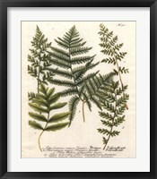 Fern Gathering II Framed Print